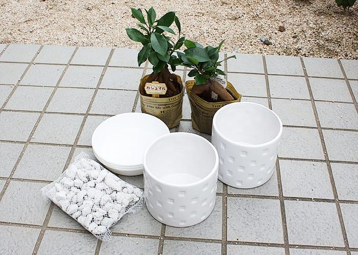 買ってきた植物を鉢に植え替え