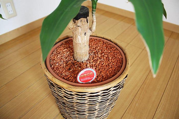 植木鉢にセラミス グラニュー