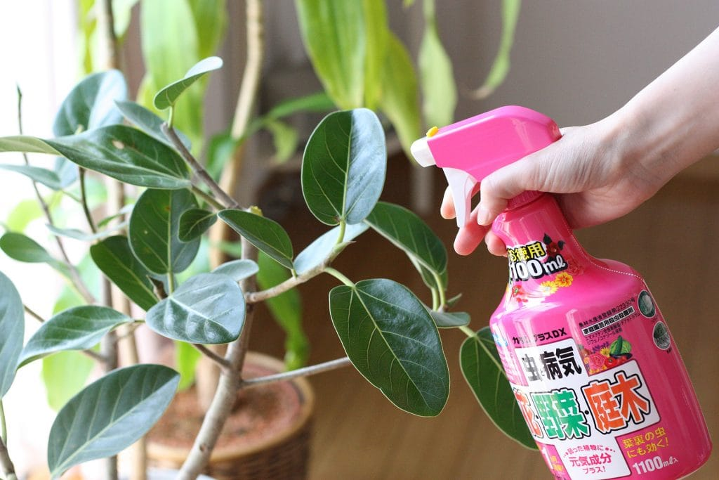 観葉植物の防虫にフマキラー カダンプラスDX